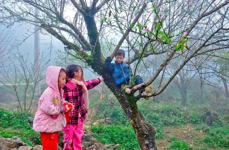 Trẻ con chơi đùa bên những cây đào rừng.