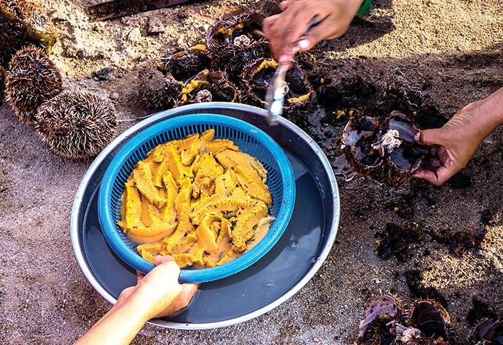 Còng nhum là sản vật của biển.