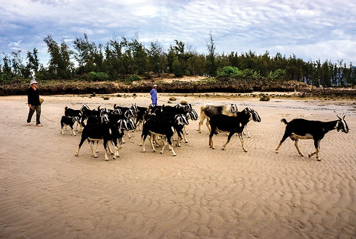 Vùng đất này còn thích hợp cho chăn nuôi.