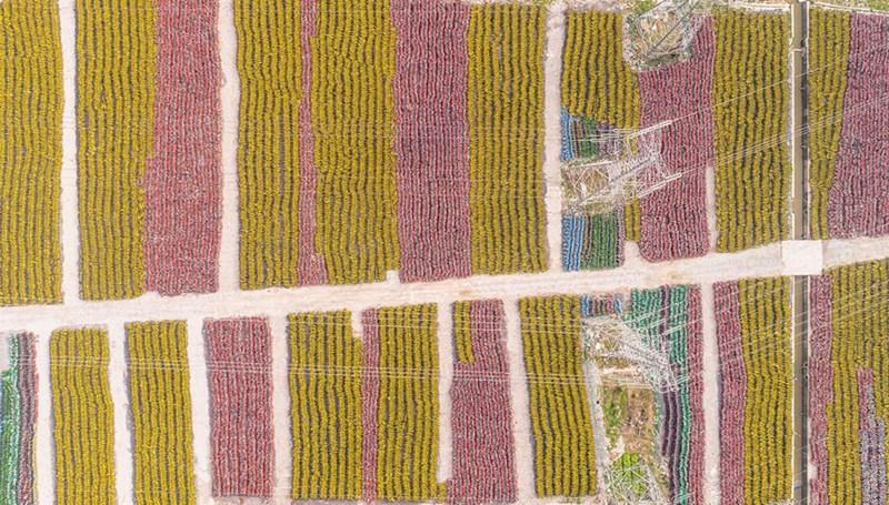 Hàng chục nghìn chiếc xe không sử dụng đủ màu sắc ở một khu đất gần Thượng Hải.