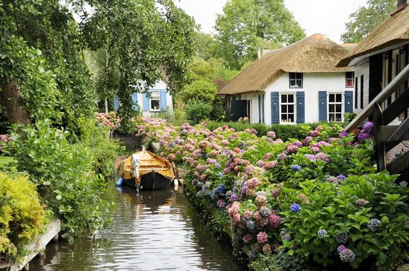 Hoa với màu sắc rực rỡ được bắt gặp ở mọi nơi