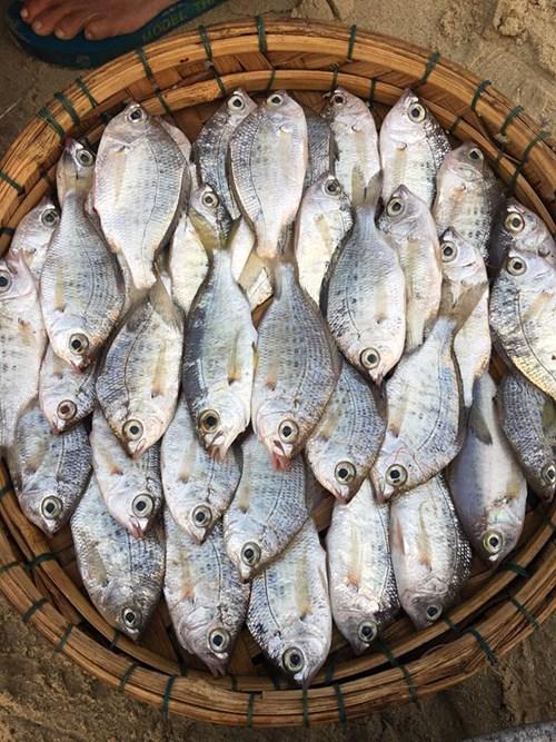 Cá mới đánh bắt về được xếp kín mẹt để khách dễ quan sát. Hàng nào cũng có thùng xốp cho khách mua lượng lớn.